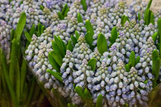 New-Covent-Garden-Flower-Market-February-2015-Market-Report-Flowerona-8.jpg?mtime=20170907141425#asset:9670