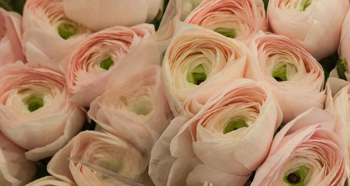New-Covent-Garden-Flower-Market-February-2015-Market-Report-Flowerona-Hero.jpg?mtime=20170907141440#asset:9695
