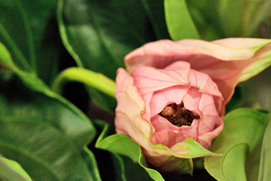 New-Covent-Garden-Flower-Market-January-2014-Flowerona-13.jpg?mtime=20170914105206#asset:10515