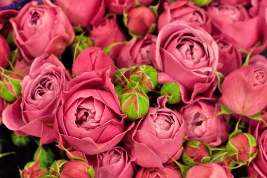 New-Covent-Garden-Flower-Market-January-2014-Flowerona-7.jpg?mtime=20170914105203#asset:10509