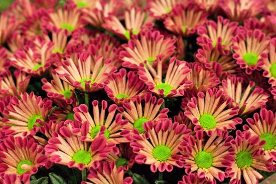 New-Covent-Garden-Flower-Market-January-2014-Flowerona-8.jpg?mtime=20170914105203#asset:10510