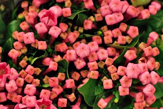 New-Covent-Garden-Flower-Market-January-2014-Flowerona-9.jpg?mtime=20170914105204#asset:10511