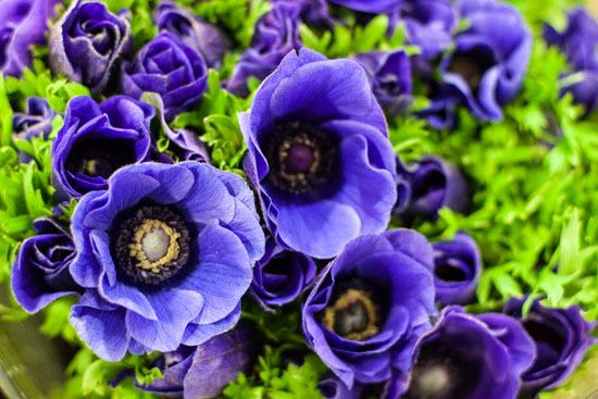 New-Covent-Garden-Flower-Market-January-2015-Market-Report-Flowerona_-10.jpg?mtime=20170908151453#asset:9781