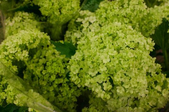 New-Covent-Garden-Flower-Market-January-2015-Market-Report-Flowerona_-12.jpg?mtime=20170908151454#asset:9783