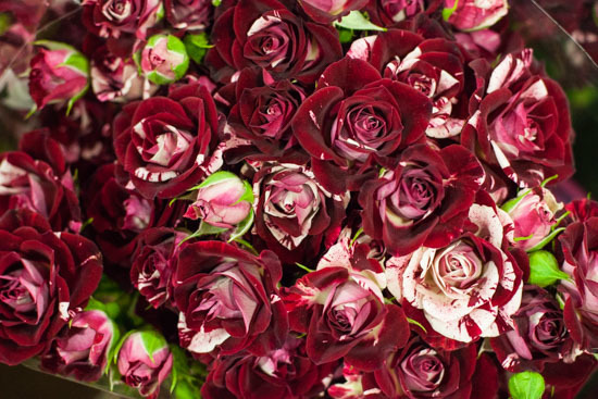 New-Covent-Garden-Flower-Market-January-2015-Market-Report-Flowerona_-15.jpg?mtime=20170908151455#asset:9786