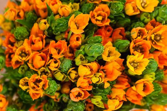 New-Covent-Garden-Flower-Market-January-2015-Market-Report-Flowerona_-18.jpg?mtime=20170908151456#asset:9789