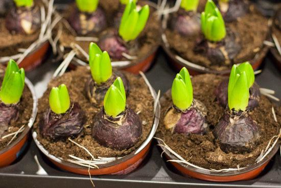 New-Covent-Garden-Flower-Market-January-2015-Market-Report-Flowerona_-20.jpg?mtime=20170908151457#asset:9791