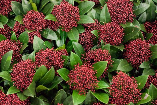 New-Covent-Garden-Flower-Market-January-2015-Market-Report-Flowerona_-23.jpg?mtime=20170908151457#asset:9794