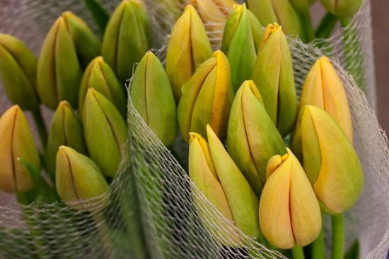 New-Covent-Garden-Flower-Market-January-2015-Market-Report-Flowerona_-5.jpg?mtime=20170908151451#asset:9776