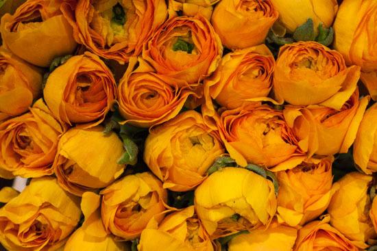 New-Covent-Garden-Flower-Market-January-2015-Market-Report-Flowerona_-7.jpg?mtime=20170908151452#asset:9778
