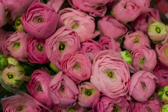 New-Covent-Garden-Flower-Market-January-2015-Market-Report-Flowerona_-8.jpg?mtime=20170908151452#asset:9779