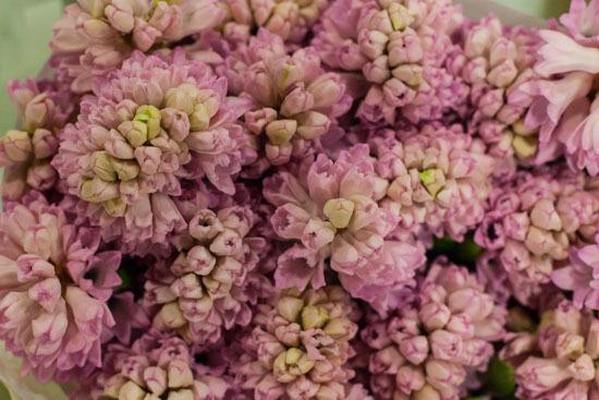 New-Covent-Garden-Flower-Market-January-2015-Market-Report-Flowerona_-9.jpg?mtime=20170908151453#asset:9780