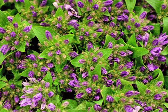 New-Covent-Garden-Flower-Market-June-Market-Report-Flowerona-12.jpg?mtime=20170913123932#asset:10208