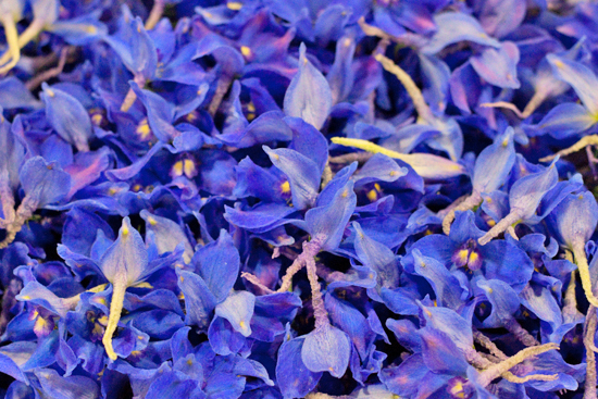 New-Covent-Garden-Flower-Market-June-Market-Report-Flowerona-14.jpg?mtime=20170913123934#asset:10210
