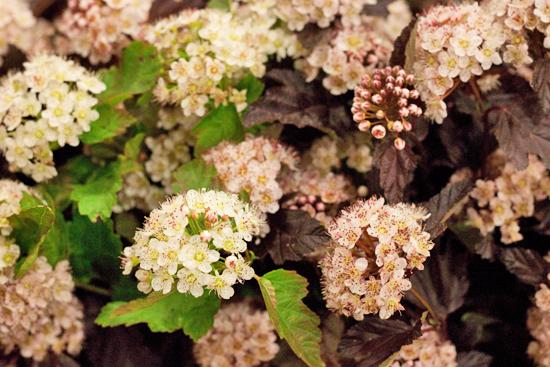 New-Covent-Garden-Flower-Market-June-Market-Report-Flowerona-15.jpg?mtime=20170913123935#asset:10211