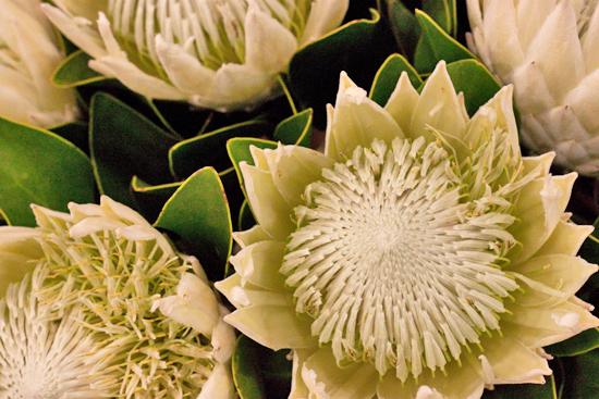 New-Covent-Garden-Flower-Market-June-Market-Report-Flowerona-16.jpg?mtime=20170913123935#asset:10212