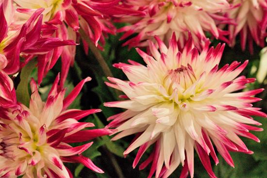 New-Covent-Garden-Flower-Market-June-Market-Report-Flowerona-18.jpg?mtime=20170913123936#asset:10214