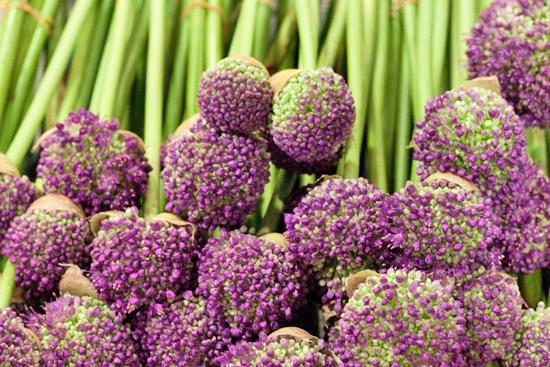 New-Covent-Garden-Flower-Market-June-Market-Report-Flowerona-2.jpg?mtime=20170913123951#asset:10198