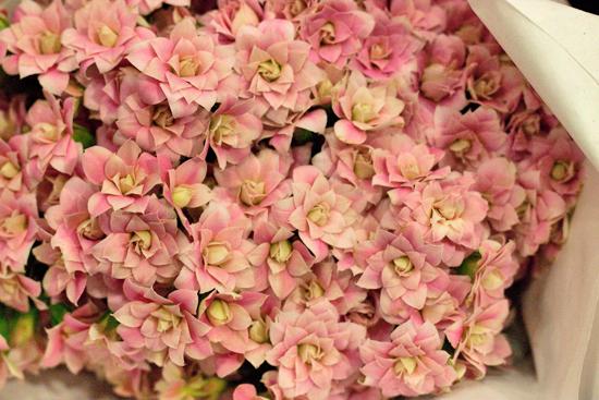 New-Covent-Garden-Flower-Market-June-Market-Report-Flowerona-21.jpg?mtime=20170913123938#asset:10217