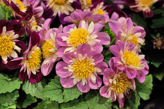 New-Covent-Garden-Flower-Market-June-Market-Report-Flowerona-22.jpg?mtime=20170913123957#asset:10218