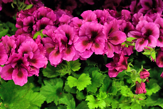 New-Covent-Garden-Flower-Market-June-Market-Report-Flowerona-23.jpg?mtime=20170913123939#asset:10219
