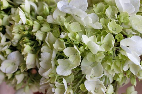 New-Covent-Garden-Flower-Market-June-Market-Report-Flowerona-34.jpg?mtime=20170913123944#asset:10230