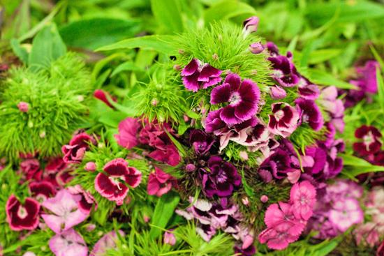 New-Covent-Garden-Flower-Market-June-Market-Report-Flowerona-5.jpg?mtime=20170913123953#asset:10201