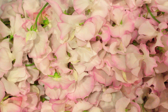 New-Covent-Garden-Flower-Market-June-Market-Report-Flowerona-6.jpg?mtime=20170913123953#asset:10202
