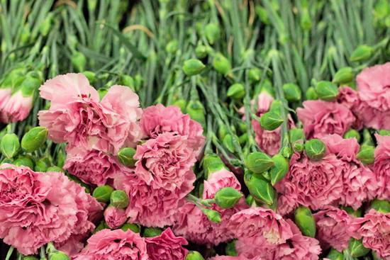 New-Covent-Garden-Flower-Market-June-Market-Report-Flowerona-7.jpg?mtime=20170913123954#asset:10203