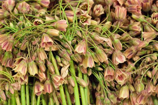 New-Covent-Garden-Flower-Market-June-Market-Report-Flowerona-8.jpg?mtime=20170913123954#asset:10204