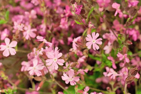 New-Covent-Garden-Flower-Market-June-Market-Report-Flowerona-9.jpg?mtime=20170913123955#asset:10205