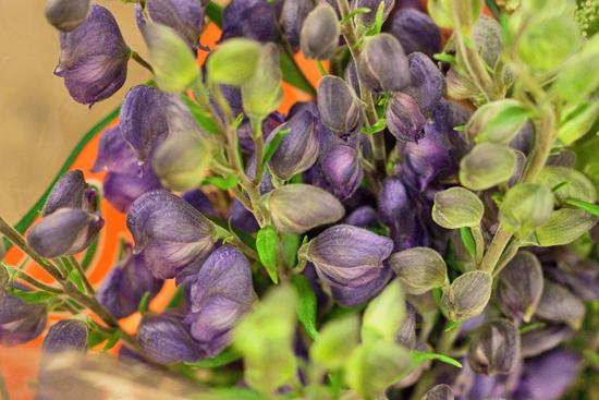 New-Covent-Garden-Flower-Market-March-Market-Report-Flowerona-18.jpg?mtime=20170913161830#asset:10365