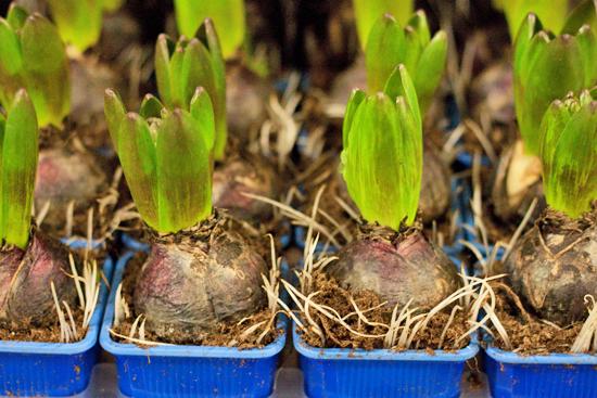 New-Covent-Garden-Flower-Market-March-Market-Report-Flowerona-20.jpg?mtime=20170913161830#asset:10367