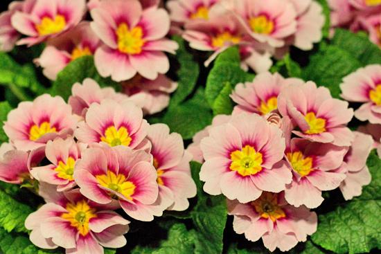New-Covent-Garden-Flower-Market-March-Market-Report-Flowerona-24.jpg?mtime=20170913161833#asset:10371
