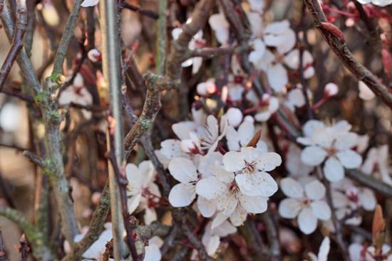 New-Covent-Garden-Flower-Market-March-Market-Report-Flowerona-25.jpg?mtime=20170913161844#asset:10383