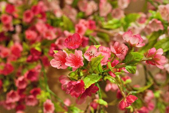 New-Covent-Garden-Flower-Market-March-Market-Report-Flowerona-35.jpg?mtime=20170913161834#asset:10374