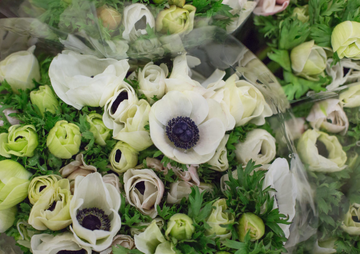 Market Report Flowerona High Res Anemones At Dg Wholesale Flowers