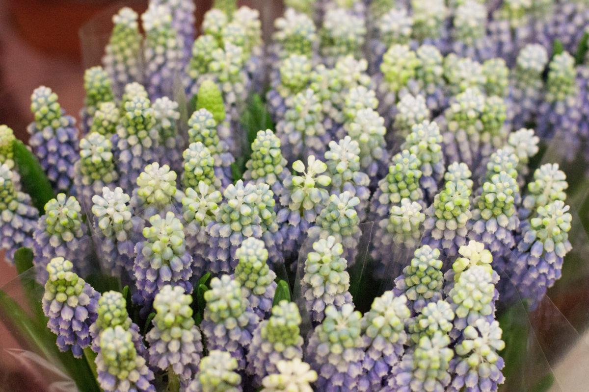 New Covent Garden Flower Market April 2015 Market Report Flowerona 10 Hr