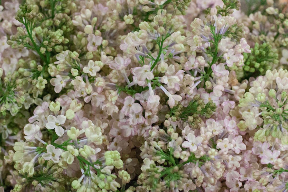 New Covent Garden Flower Market April 2015 Market Report Flowerona 13 Hr