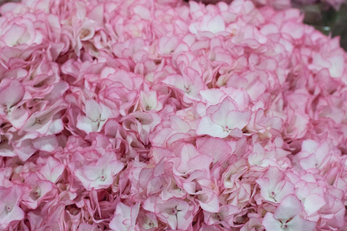 New Covent Garden Flower Market April 2015 Market Report Flowerona 14 Hr