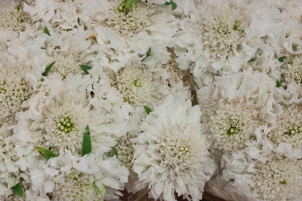 New Covent Garden Flower Market April 2015 Market Report Flowerona 16 Hr