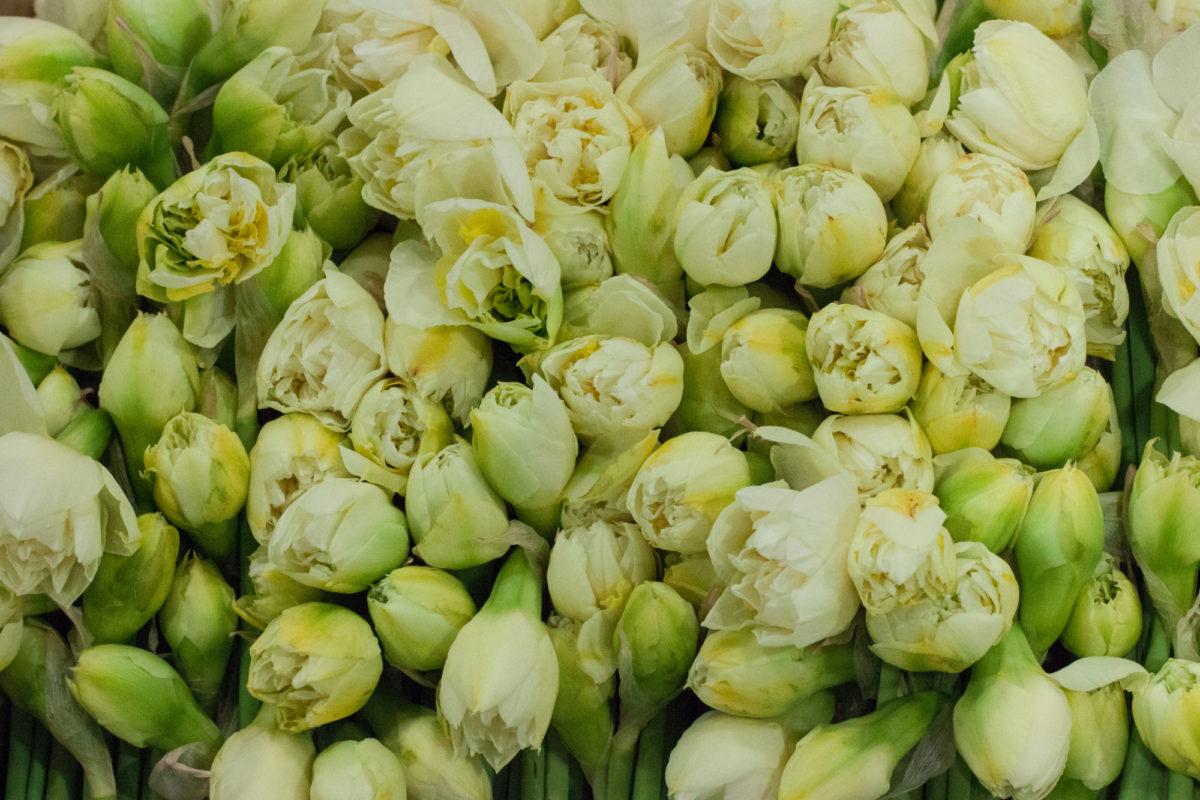 New Covent Garden Flower Market April 2015 Market Report Flowerona 2 Hr