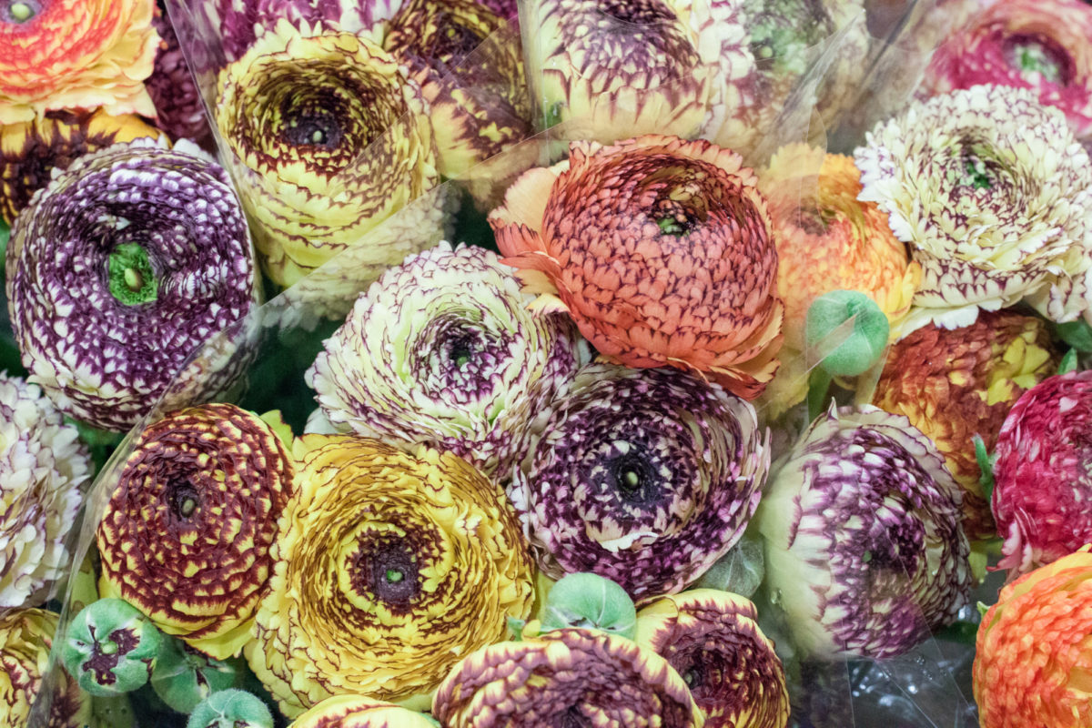 New Covent Garden Flower Market April 2015 Market Report Flowerona 20 Hr