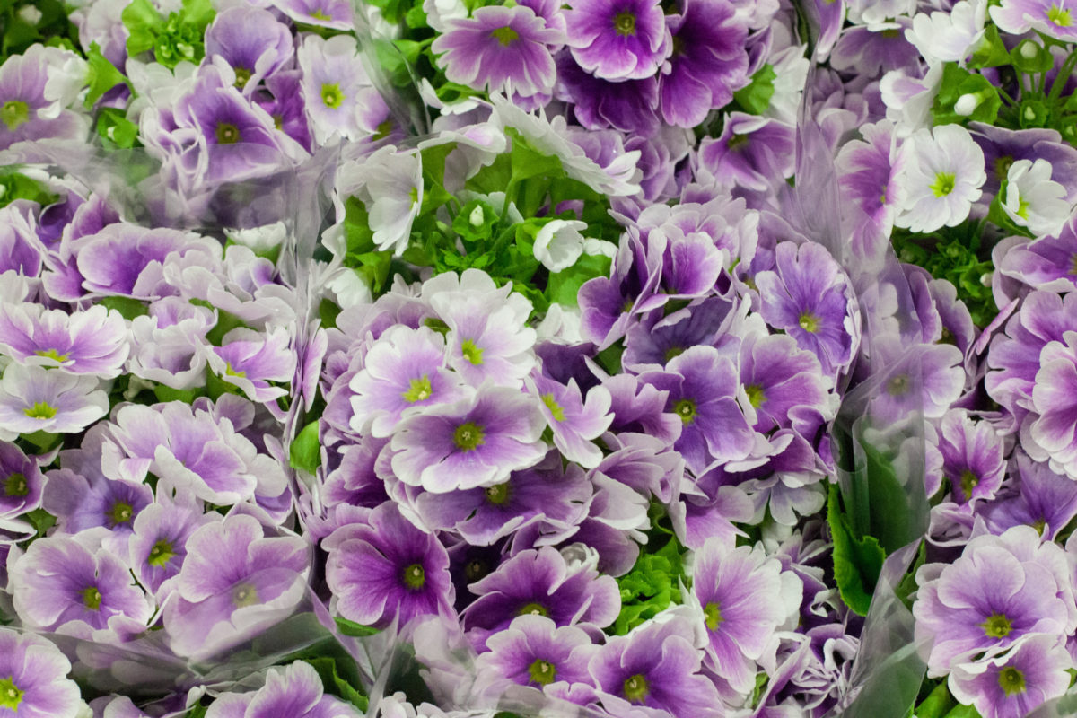 New Covent Garden Flower Market April 2015 Market Report Flowerona 25 Hr