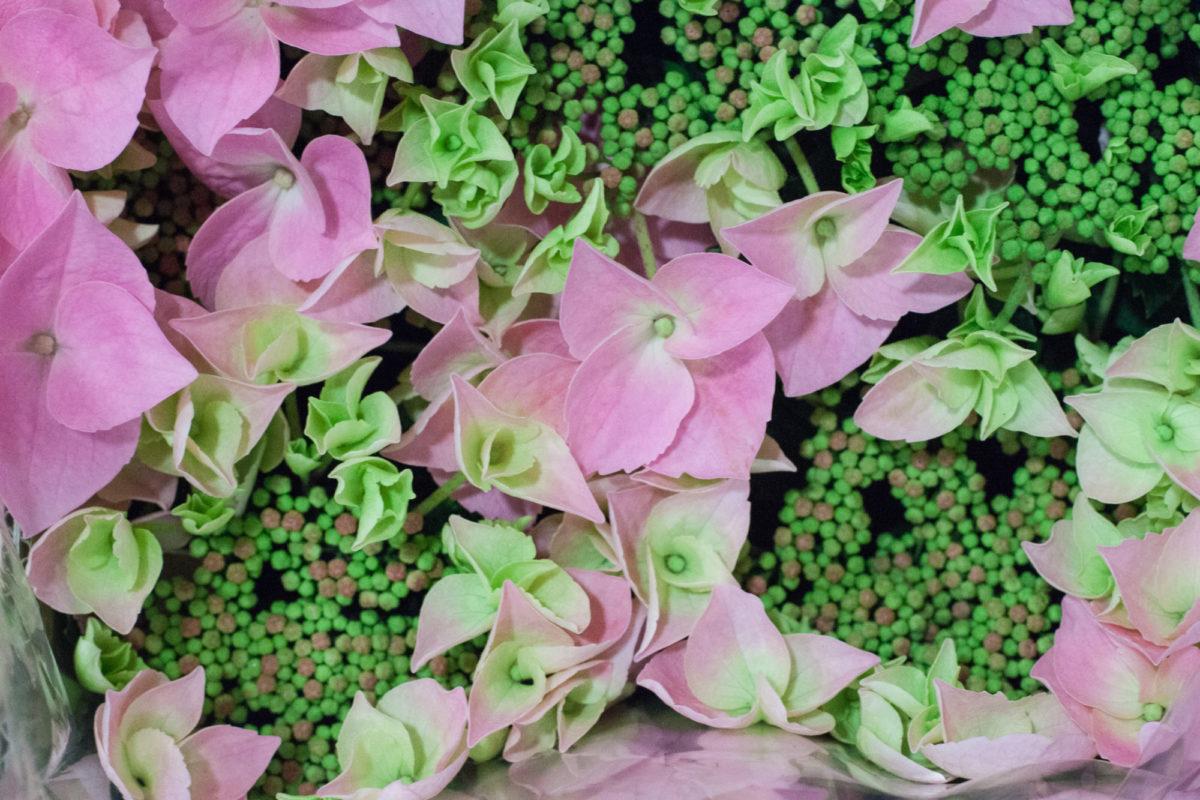 New Covent Garden Flower Market April 2015 Market Report Flowerona 26 Hr