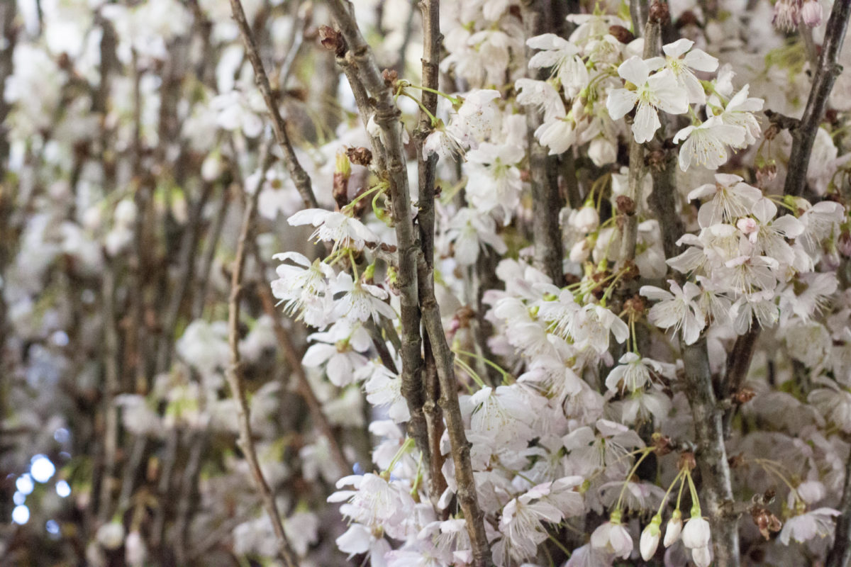 New Covent Garden Flower Market April 2015 Market Report Flowerona 29 Hr