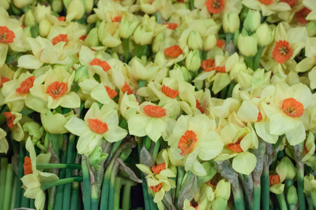 New Covent Garden Flower Market April 2015 Market Report Flowerona 3 Hr