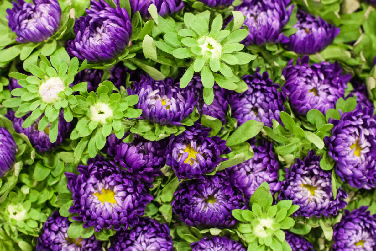 New Covent Garden Flower Market April 2015 Market Report Flowerona 7 Hr
