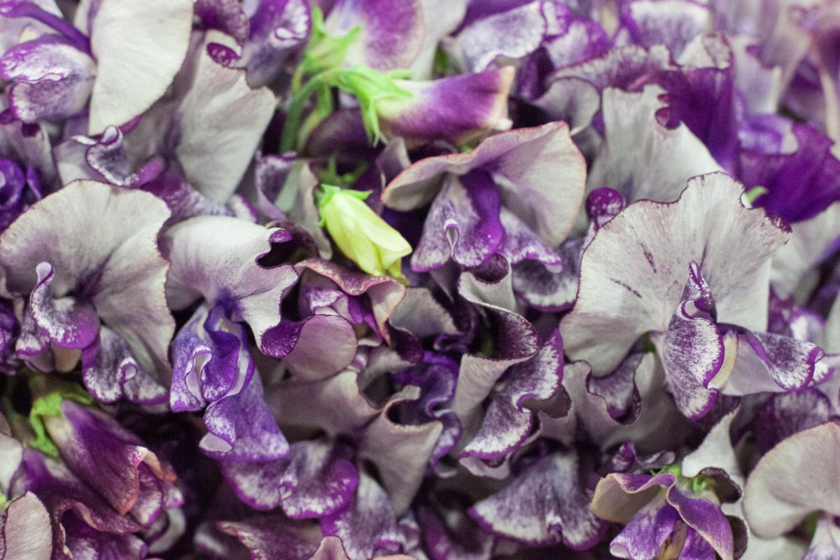 New Covent Garden Flower Market April 2015 Market Report Flowerona 8 Hr