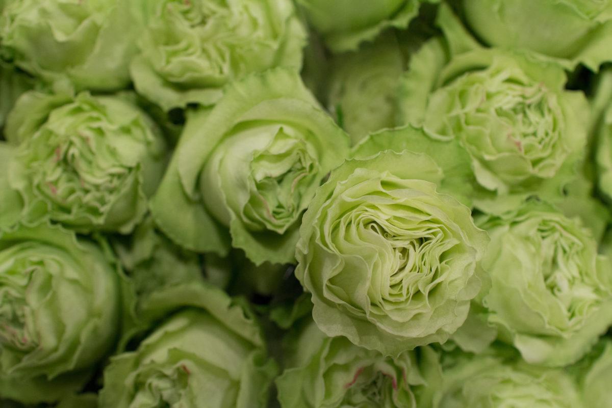 New Covent Garden Flower Market April 2016 Market Report Flowerona Hr 12